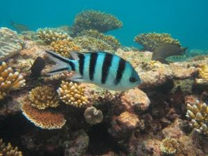 Snorkelen op Kreta