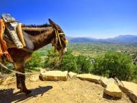 Fly-drive Charmant Noord-Kreta